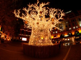 christmas-lights-in-South-Africa