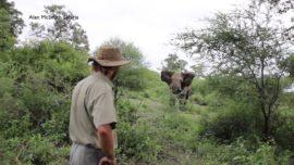 An elephant encounter