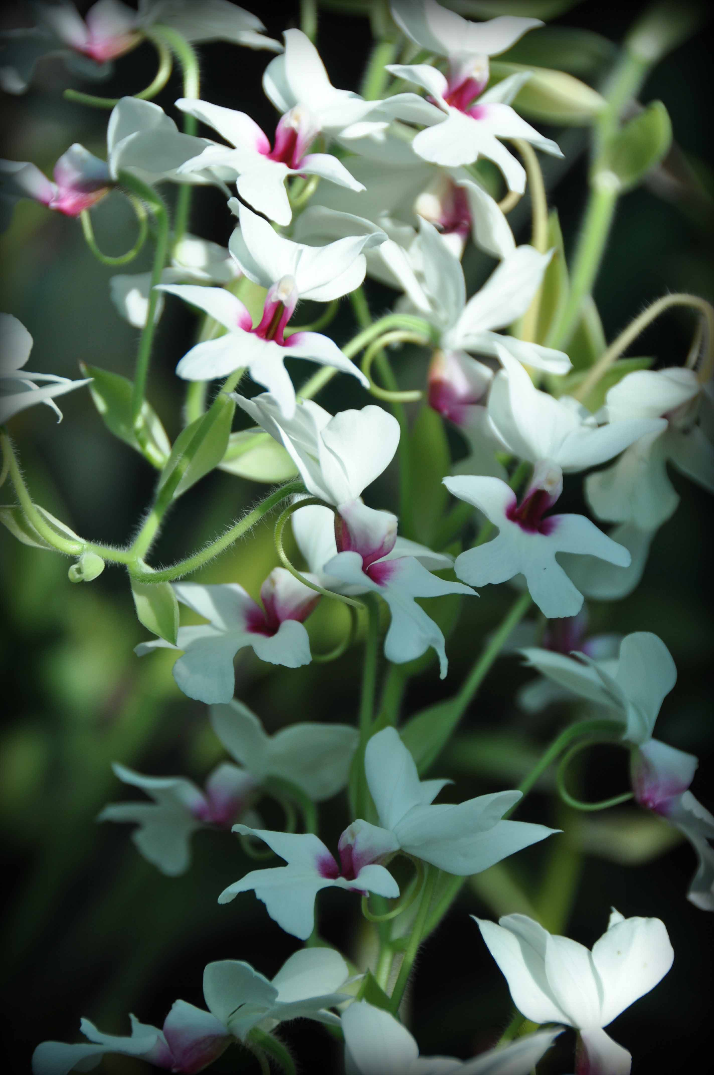 The ultimate Orchid Showcase