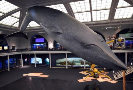 60e6d41d18434c New York sells out adult sleepover under blue whale