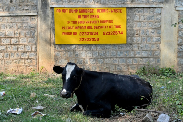 India police arrest three over cow vigilante murder | AFP