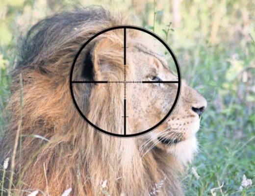 Breaking down the 1,500 lion bone export quota