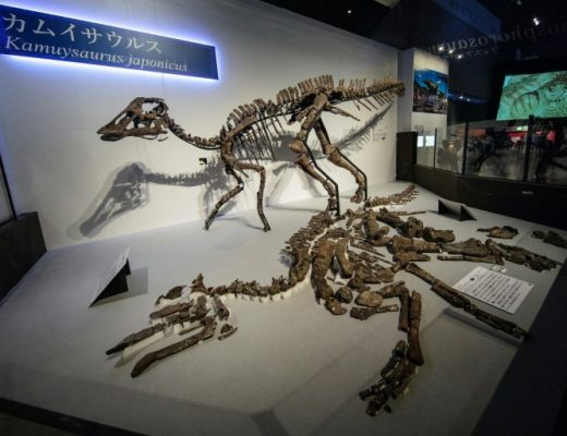 Japanese scientists find new dinosaur species   AFP   Vryheid Herald