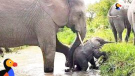 Baby Elephant Stuck In River Gets A Push From Mom