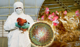 Illustration photo: Thousands of chickens and other birds had to be culled in Europe in the past year as a result of bird flu. The same fate now awaits some 28 000 birds in South Africa.