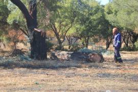 Die man wat so rustig besig was om die boom af te saag.
