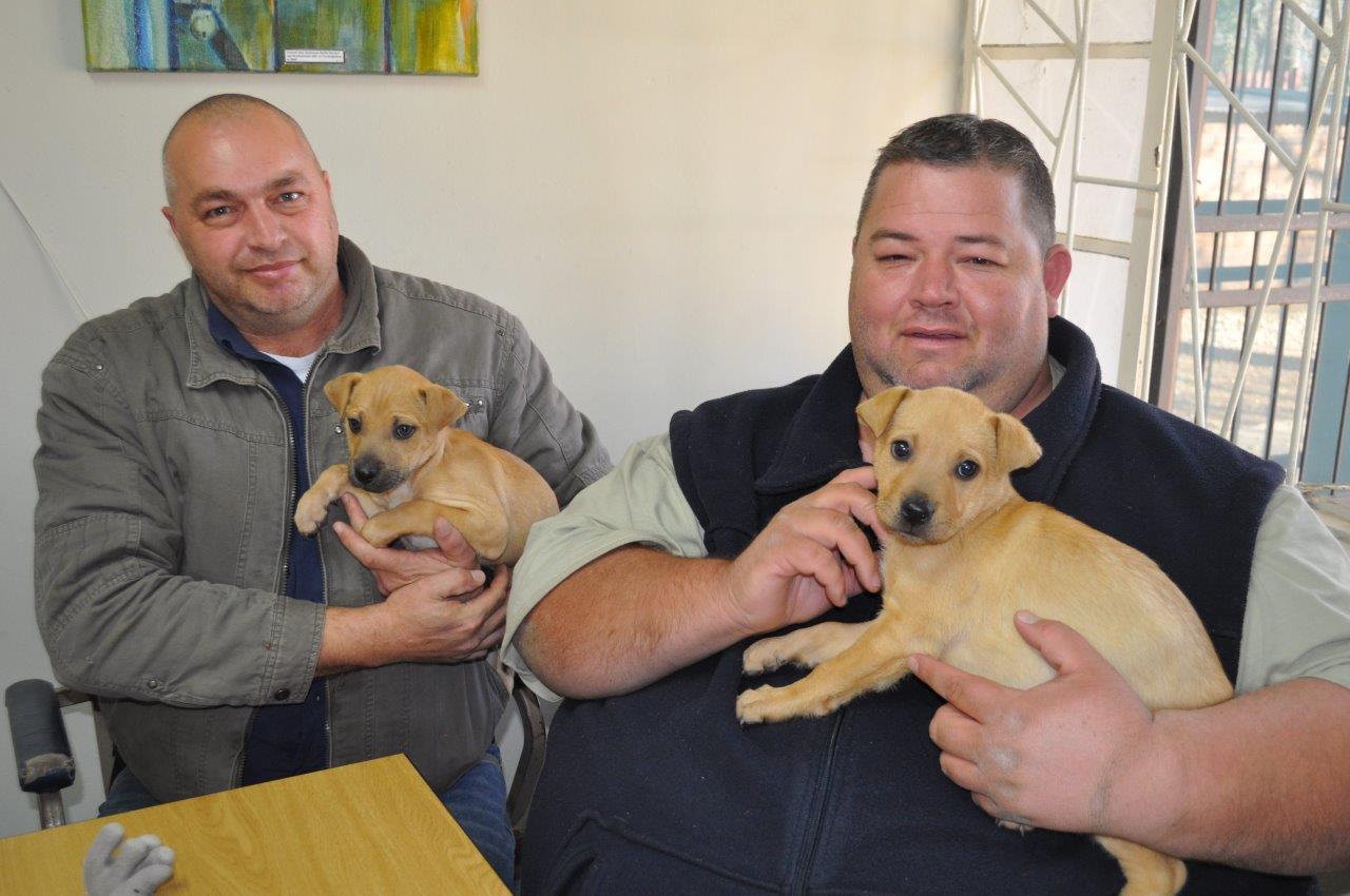Andries Venter (bestuurder) en Darren Kruger (voorsitter) saam met twee hondjies wat wag om aangeneem te word. Foto: Marianke Saayman