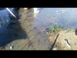VIDEO: Ventersdorp residents live among free flowing sewage