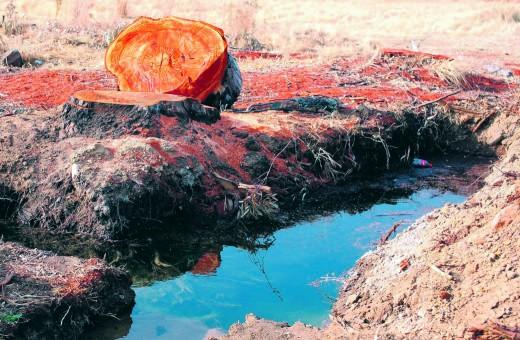 Die afgesaagde bloekomboom wat 'n groot kopseer vir Vaal Toyota in Vaalpark veroorsaak het. Foto's: Christi Nolte