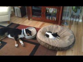 Dié video sal jou laat skaterlag: Kat neem hond se bed oor