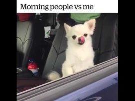 Morning people vs me