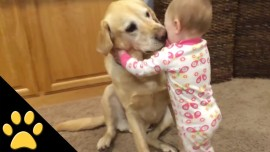 Cute Dogs And Adorable Babies