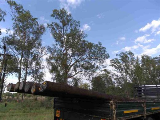 Stolen Eskom poles found on farm in Hekpoort | Krugersdorp News