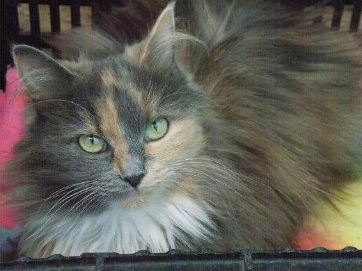 Pets up for adoption from Bedfordview SPCA | Bedfordview
