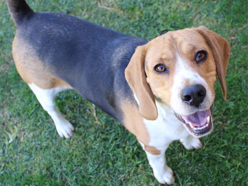 Animals at Edenvale SPCA in need of adoption | Bedfordview
