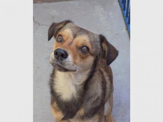 Pets up for adoption | Bedfordview Edenvale News