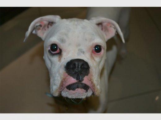 Edenvale SPCA's Dogs Dinner Fund now open | Bedfordview