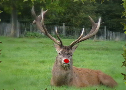 The origin of Rudolph the Red-Nosed Reindeer | Fourways Review