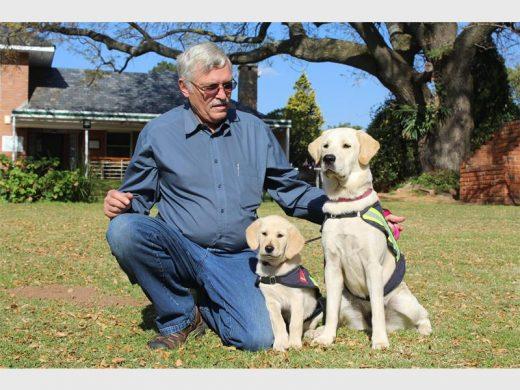 Una trama a los posibles cachorro de fondos en SA Guía de Perros | Fourways ... - Fourways Revisión 1