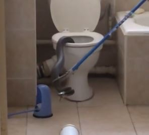 Watch Large Snake Found In Toilet City Buzz