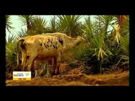 Mnikeli Ndabambi on the heatwave in South Africa