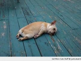 Monday-blues-dog