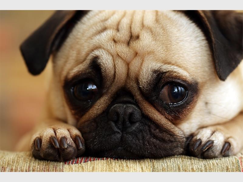sad-dog_80836