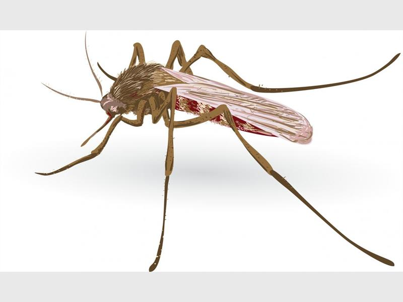 Over 90 pct of Nigerians at risk of malaria
