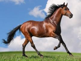 running_horse-wallpaper-1280x768