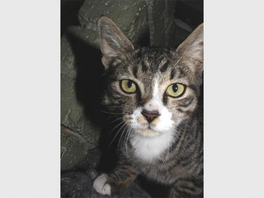 Lovely pets are up for adoption | Benoni City Times