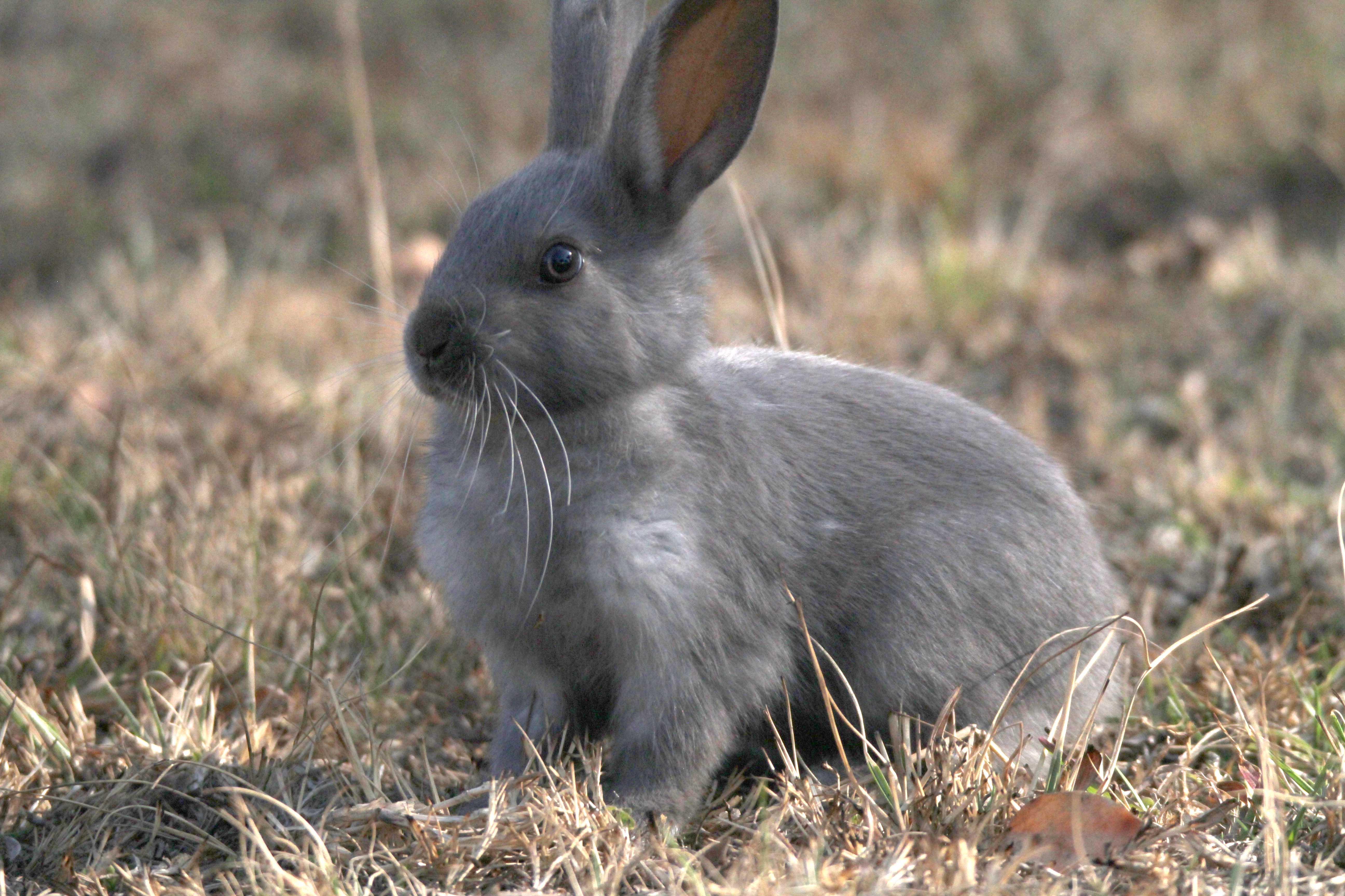 update thousands of benoni rabbits to become food at zoo benoni