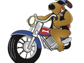 SPCA-Animal-run-20_590069200