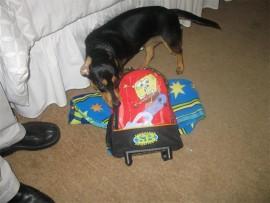 As die gesin met vakansie gaan, gaan Mitzi ook op 'n ''hondevakansie'' na die TLC Doggy Hotel, in Benoni. Onlangs het Mitzi klaar opgewonde gewag by haar sak en kombers vir haar hondevakansie.