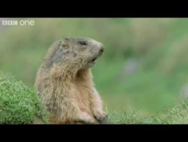 Funny Talking Animals – Walk On The Wild Side Preview – BBC One