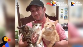 Couple devotes lives to rescuing special needs cats