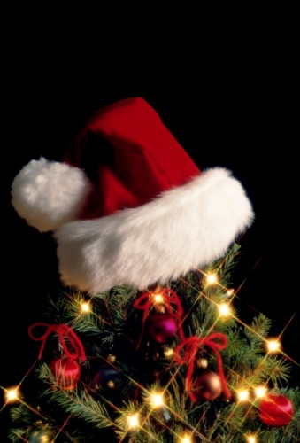 History of the Christmas tree |Springs Advertiser
