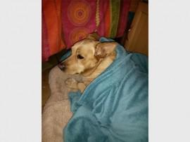 Dog'sblog_85470