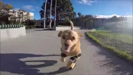 Daisy Learned How To Run In Prosthetic Legs