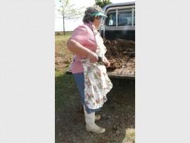Annetjie Herbst skep die miershoopgrond van haar bakkie af.