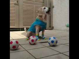 This dog can teach you a thing or two about soccer