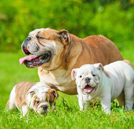 Four legged friends! | Randfontein Herald