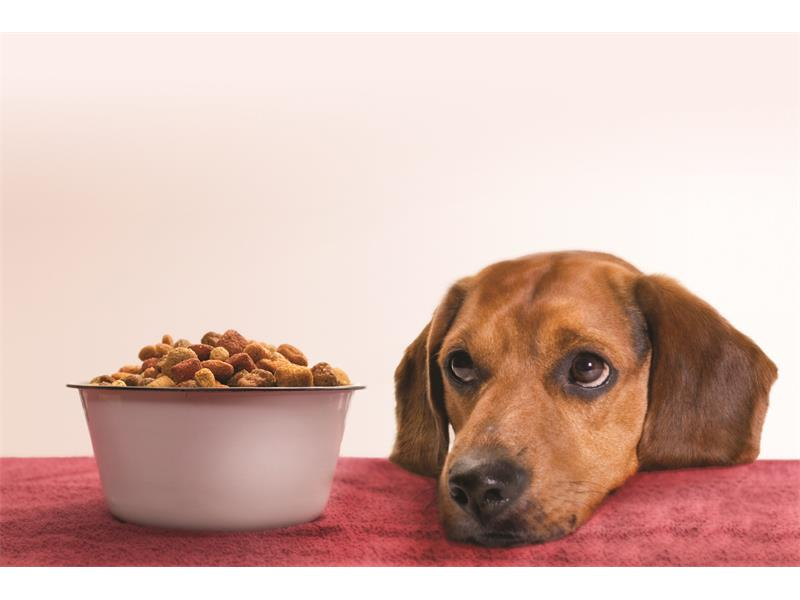 Dog Food Scare Four Contaminated Brands Removed From