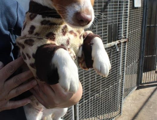Kempton SPCA in need of dog jerseys | Kempton Express