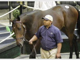 The annual National Yearling Sales were held at the Thoroughbred Breeders Association, in Gosforth Park, recently.  One of the top selling yearlings was a colt named Pietro Mascagni (Lot 166) out of Silvano-Jodie, by Western Winter, from Varsfontein Stud, which was sold to Shadwell for R2.3-million.