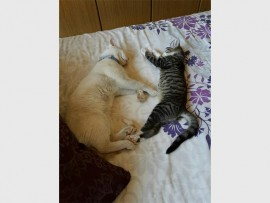 Mimosa Park cat owner Desire Nel is desperately looking for her two cats, Cola (left) and Tigger who went missing three weeks ago.