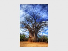 Photo: Pinterest GROWING TALL: National Arbour Week falls from 1 to 7 September and highlights the importance of conservation and environmental stability. Pictured is an ancient baobab tree, native to South Africa.