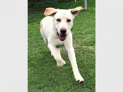 Open up your heart, adopt a pet | Sandton Chronicle
