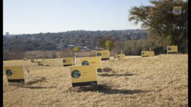 #JoburgToday –  A new baby forest of 100 trees