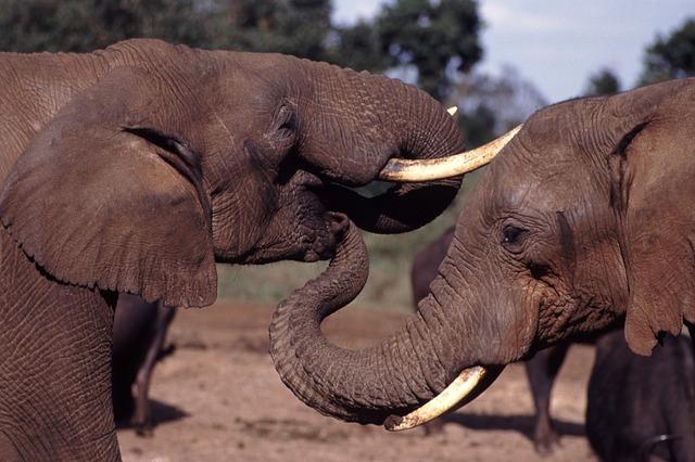 elephants-844949_640