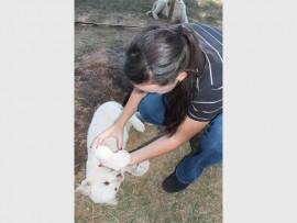OMGEE : Retha Lombard saam met een van die leeu welpies. Die diertjie is baie spelerig, maar tog so liefdevol.